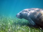 Dugong & Seagrass Research Toolkit