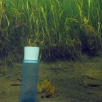 How Big, How Blue, How Beautiful: Seagrasses Help Fight Climate Change In Norway