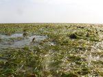Le Projet ResilienSEA Conclut Sa Série De Formations Nationales Sur L'identification, La Cartographie Et Le Suivi Des Herbiers Marins En Afrique De L'Ouest